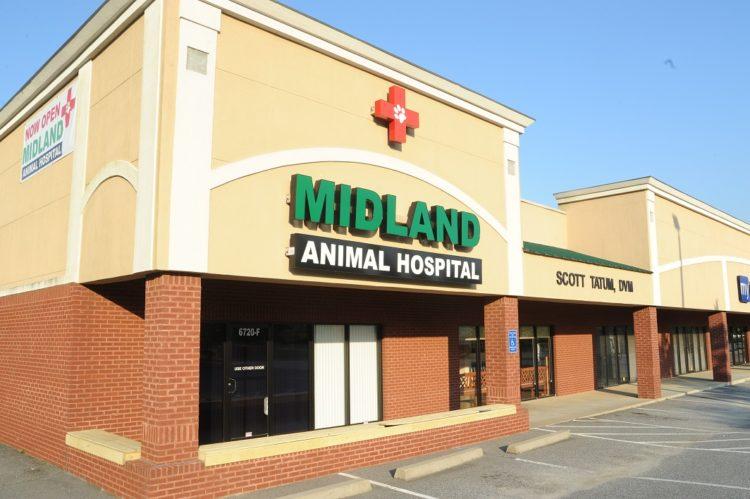 midland-veterinarian